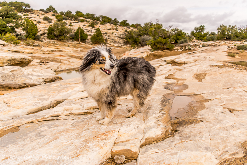 San Rafael swell exploring with the dogs