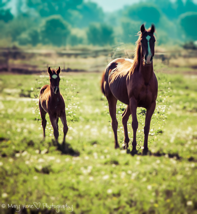 After before Friday, horses, colt