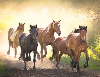 Mary Hone photography horses