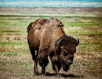 Mary Hone photography wildlife