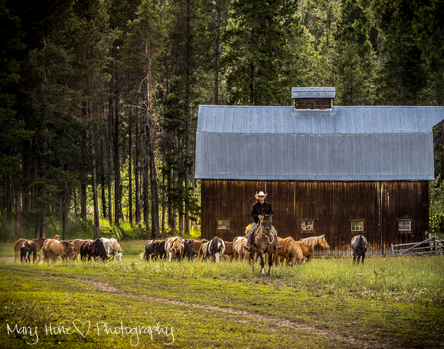Photographing horses, wyoming