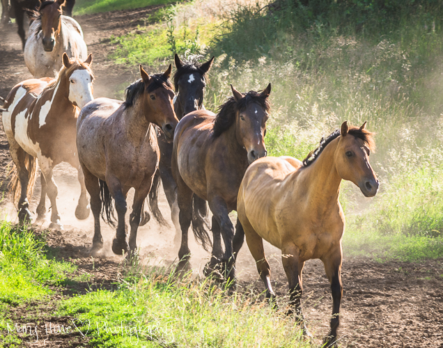 Photographing horses, Jackson Hole Wyoming