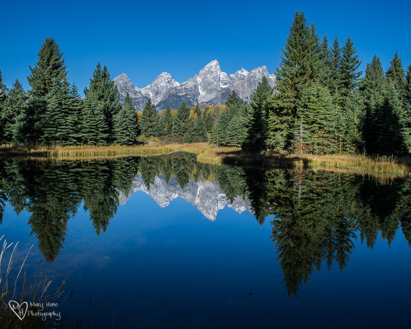 schwabacher landing fun and free things to do in jackson hole