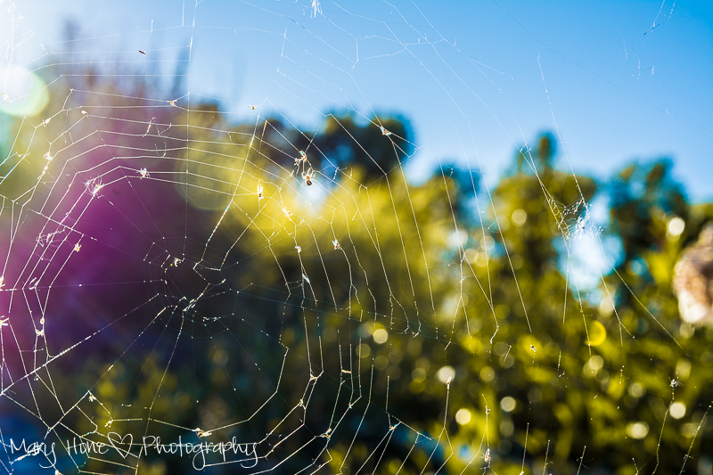 My Inspiration,spider web in the sun