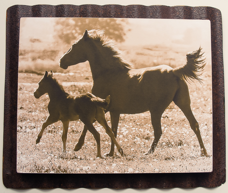 8 x 10 Custom Metal Sepia mom and baby horse