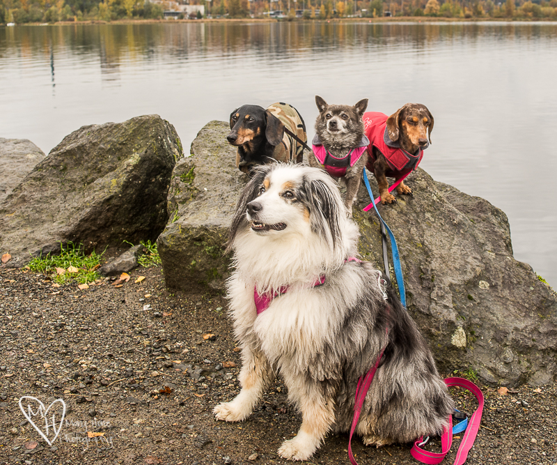 A day with the dogs in Seattle