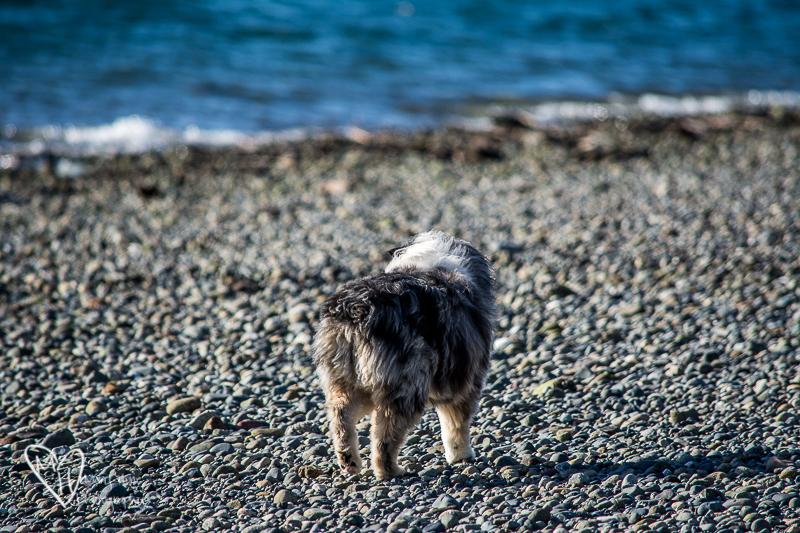 Torrey on the beach