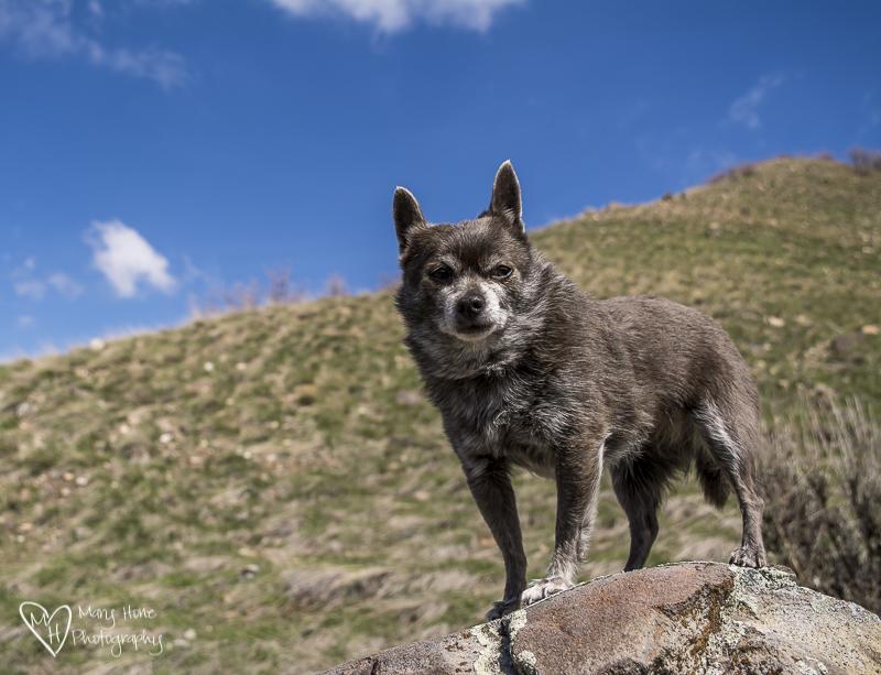 Roxy on the rocks