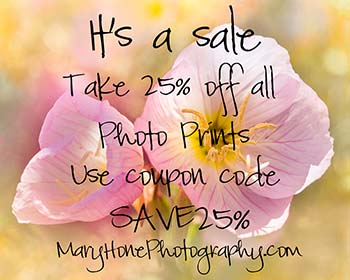 Photography sale