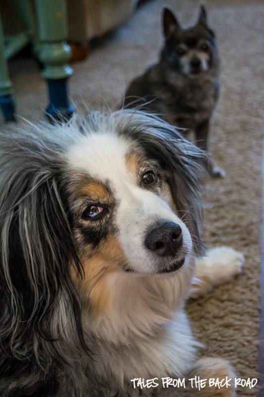 Healthy InstantPot Dog Food Recipe