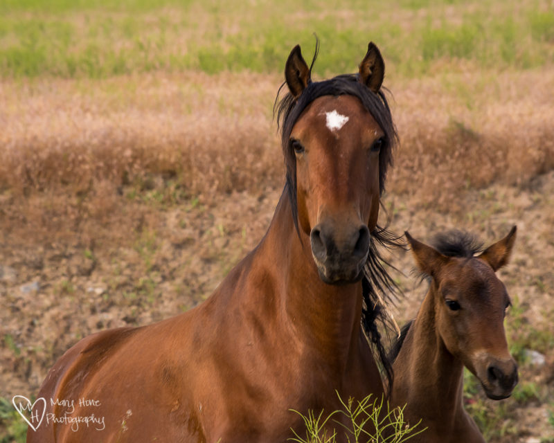 Momma and foal