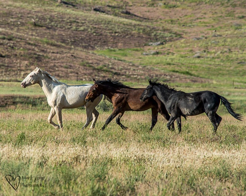 A horse of every color