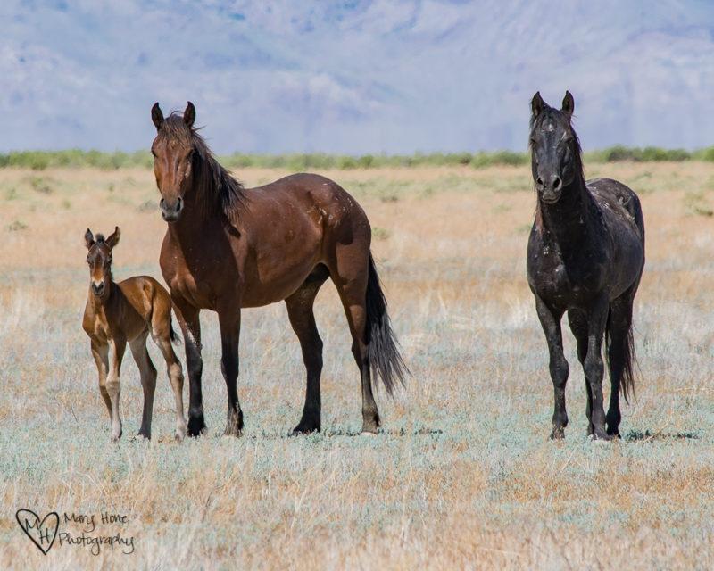 Keep the Wild Horses Wild