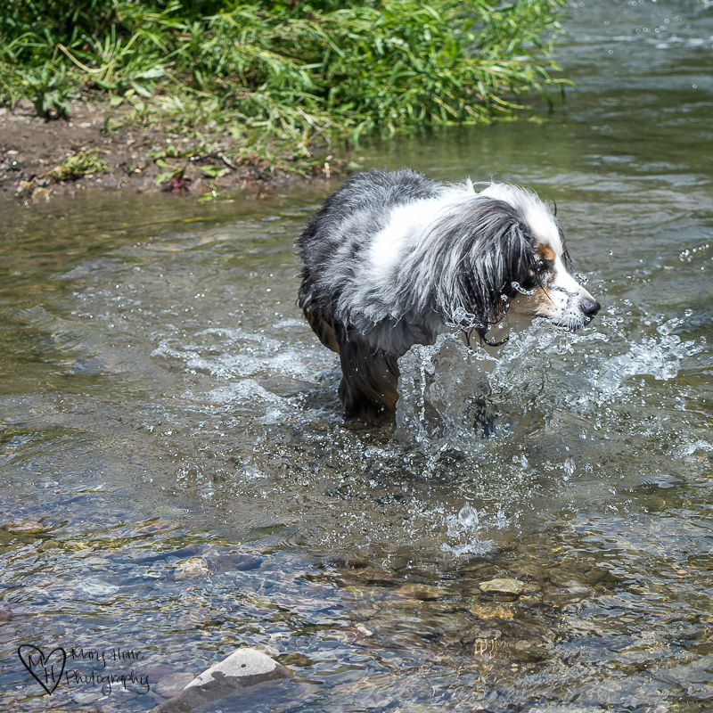 Torrey swimming-4