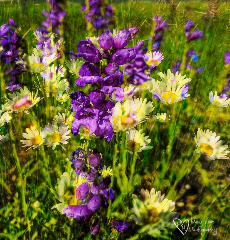 Beautiful Wyoming Wildflowers