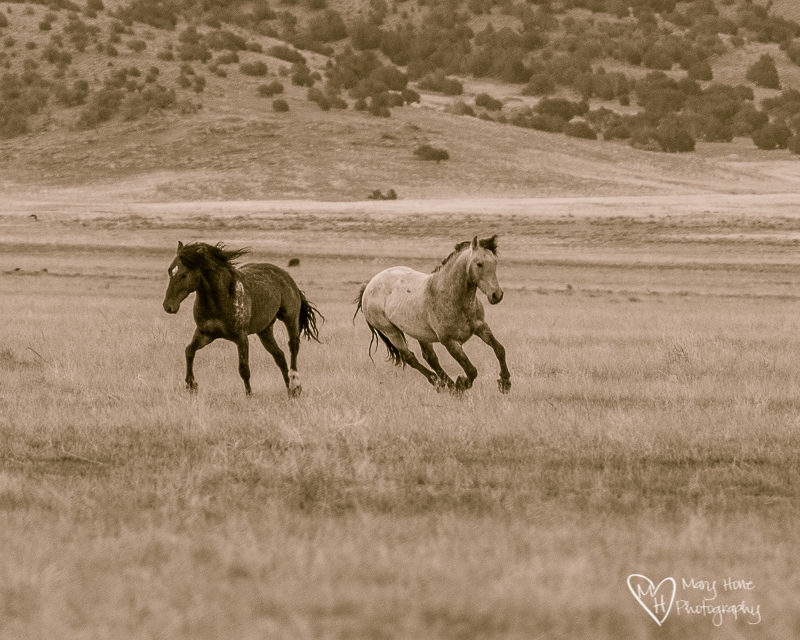 running horses having fun