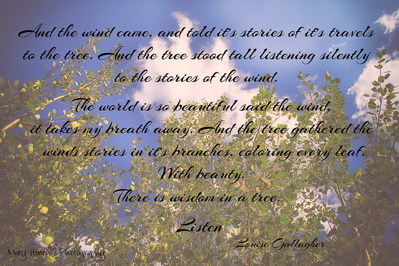 The wind in the trees poem