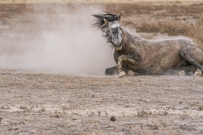 Wild Horse Week-The Watering Hole