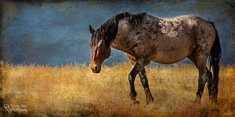 Wild Horse Week-Horses in Art