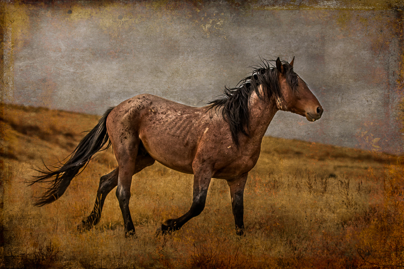 Wild Horse Week-Horses in Art wild horse photography