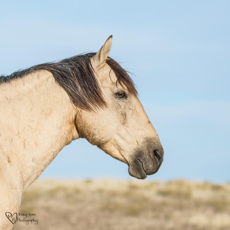 beautiful eyes of wild horse