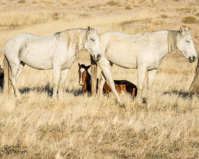 wild horses foal