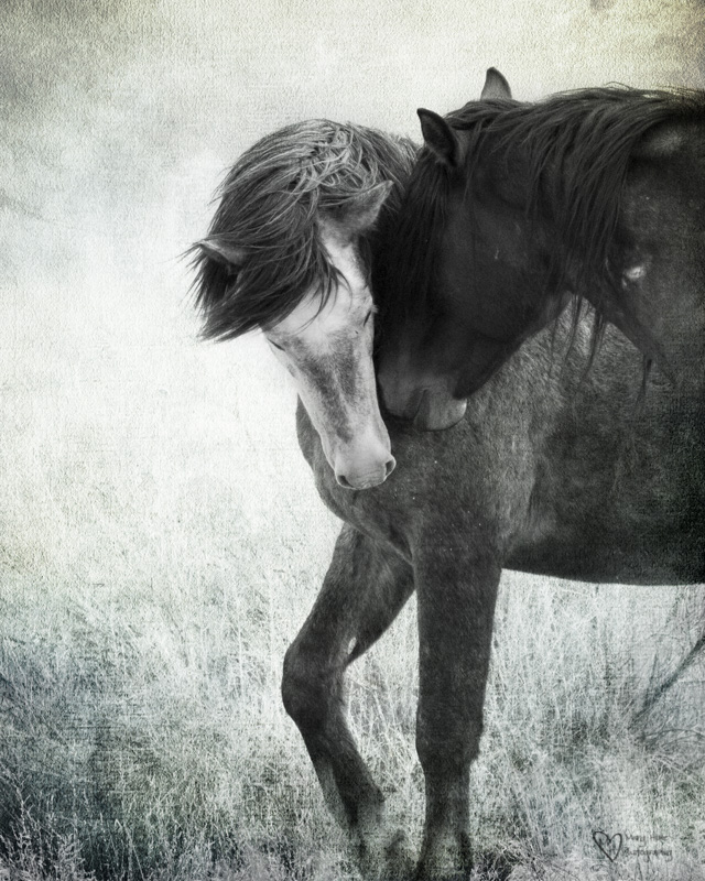 wild horses in black and white