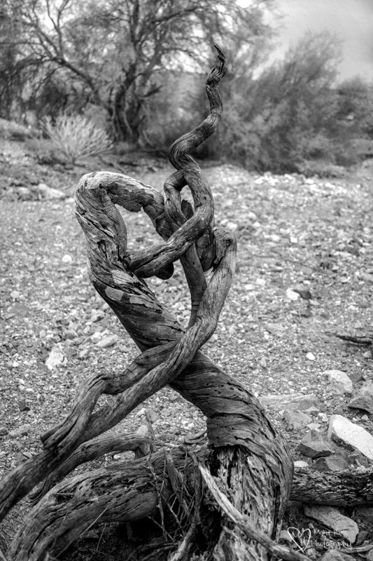 twisted dead tree