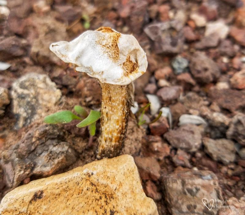 Mushroom in the desert