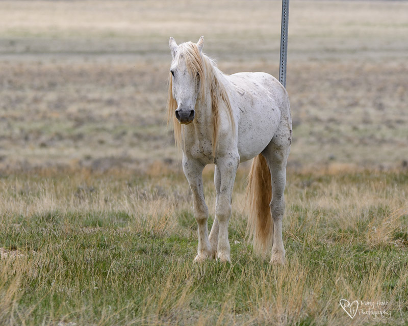 Wild horse scratching on sign
