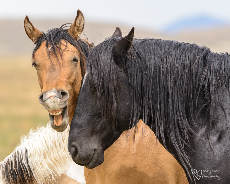 wild horses being funny