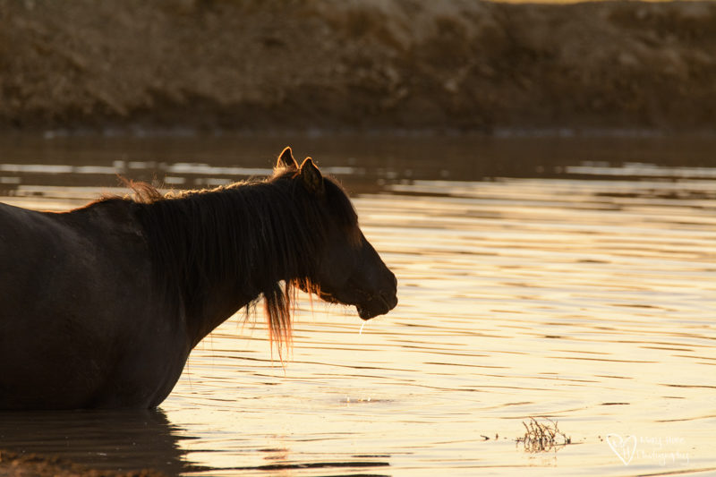 wild horse at the watering hole