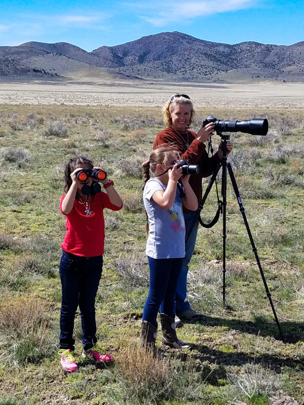 taking photos of wild horses