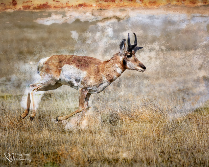 antelope, I want to share these awesome things with you