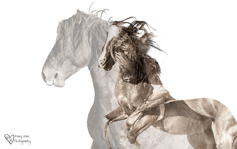 double exposure horses