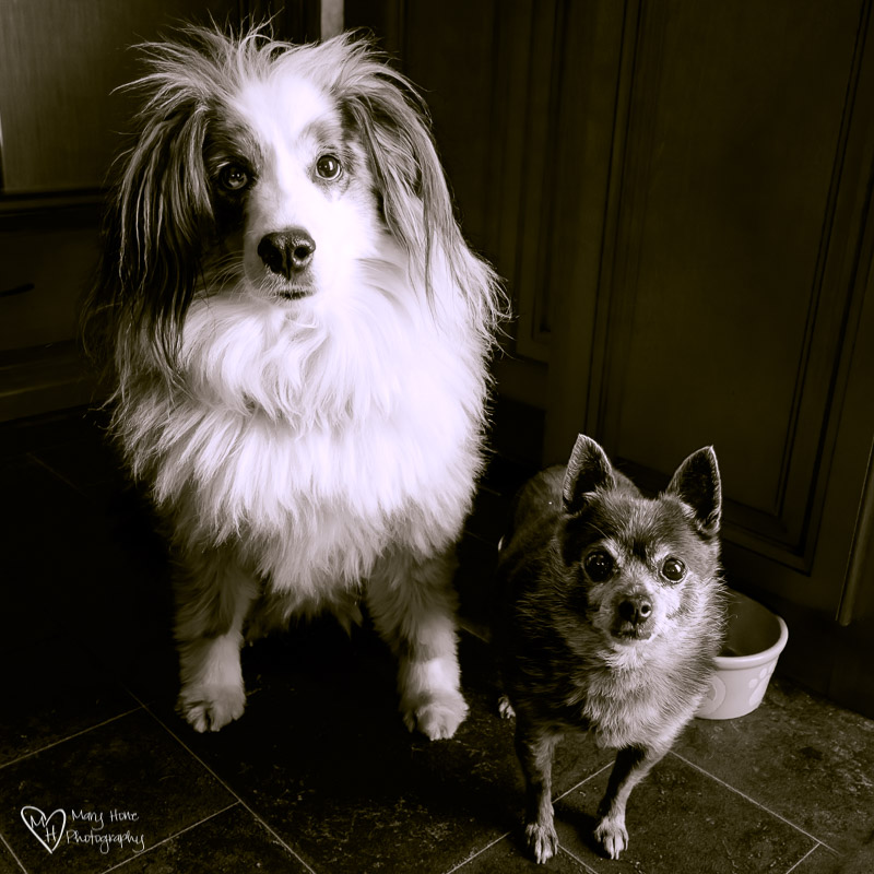 Artsy Fartsy Tuesday-Gone to the Dogs