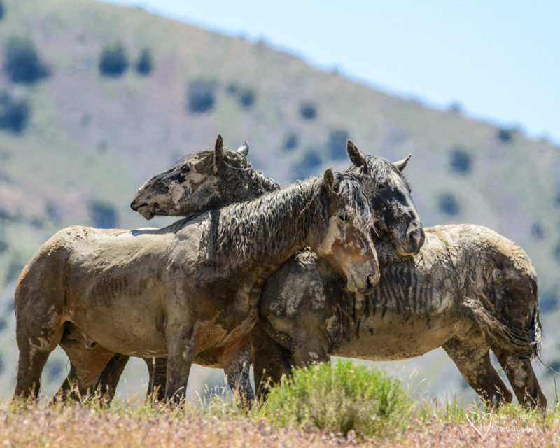 Wild Horses, Hoof beats on my heart