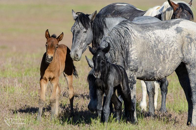 wild horse family
