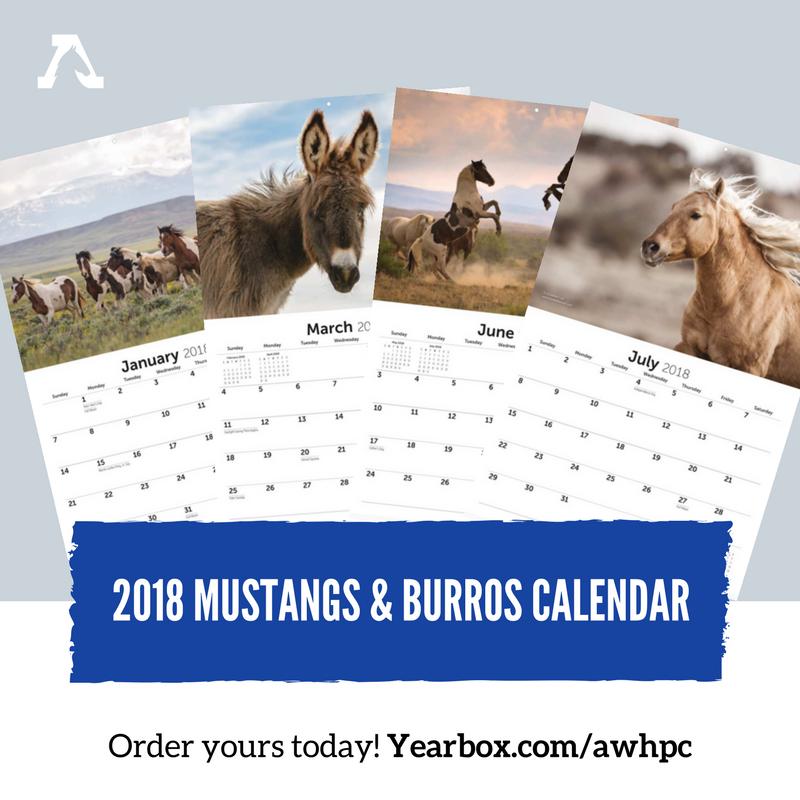american wild horse campaign calendar