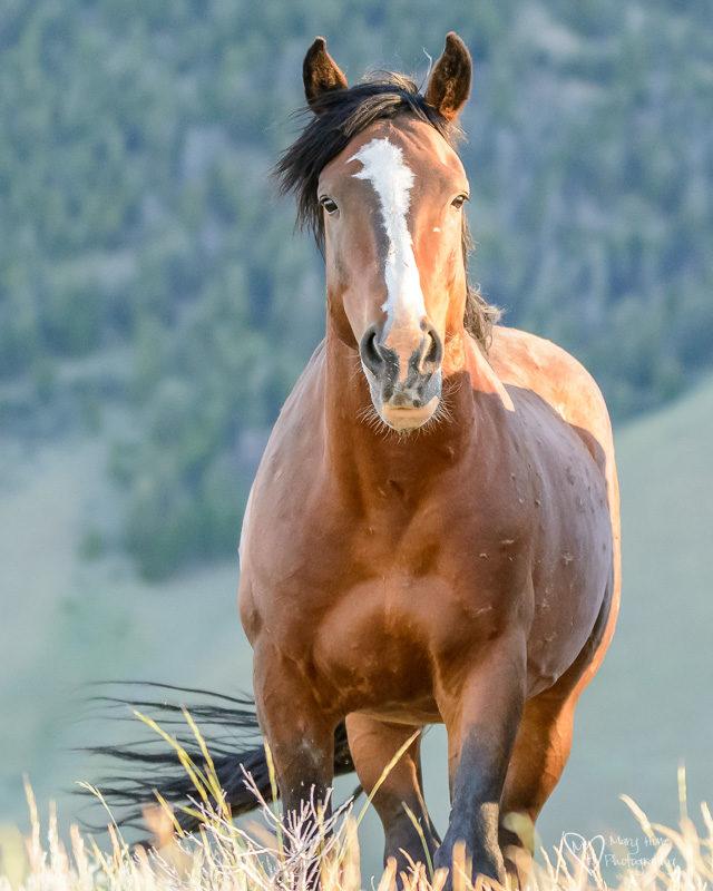 Wild horses in Idaho