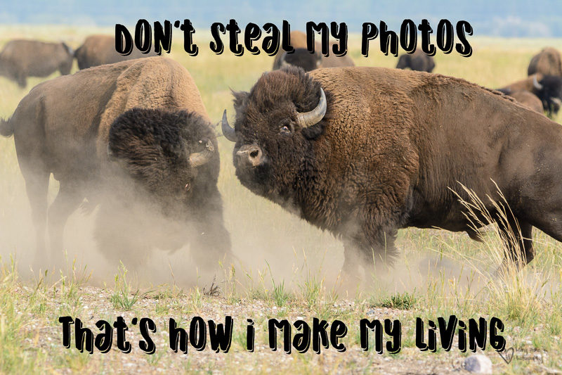 Don't steal my photos, that's how I make my living