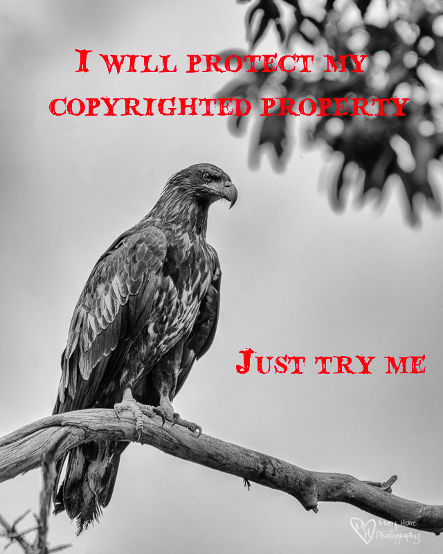 I will protect my copyrighted property