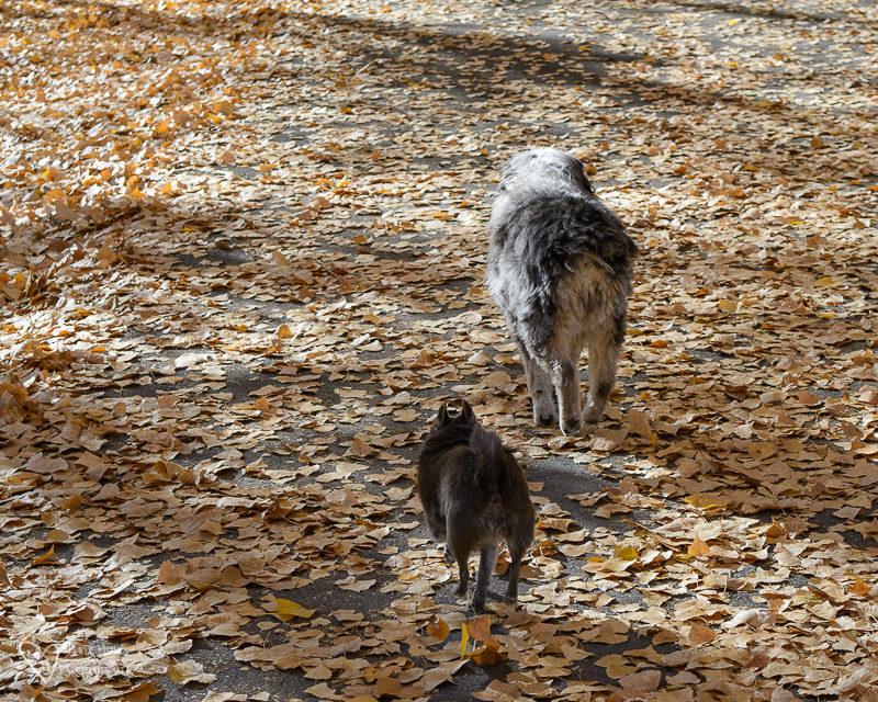 2 dogs walking