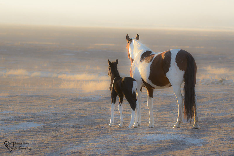 what is the future of our wild horses