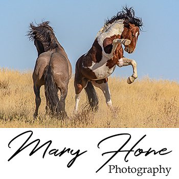 mary hone photography