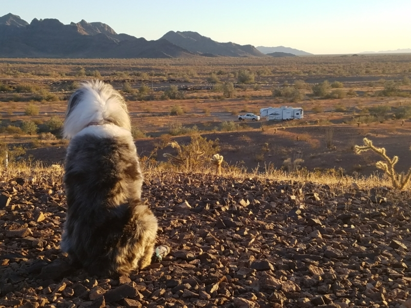 dog looking at rv in the desert