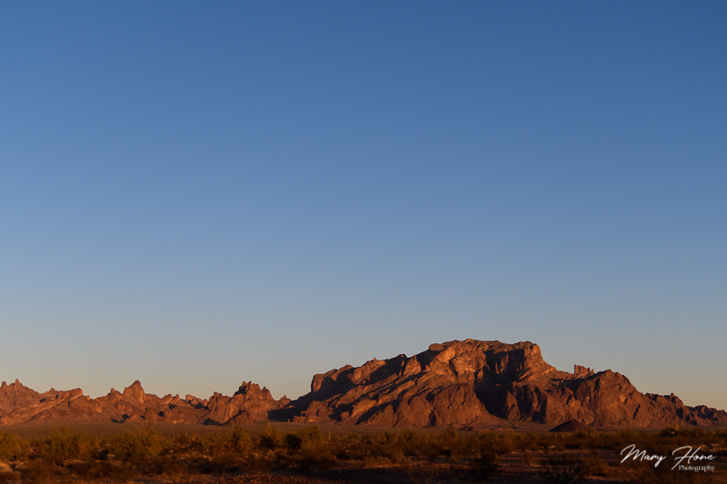 Beauty at the Kofa National Wildlife Refuge