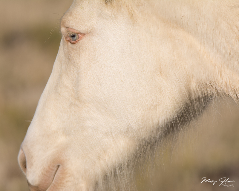 wild horse,From Clicking to Creating