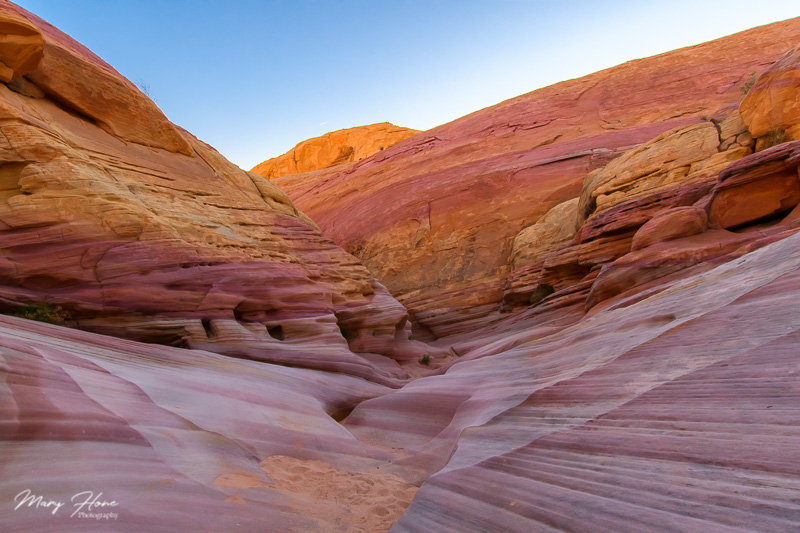 pink canyon valley of fire