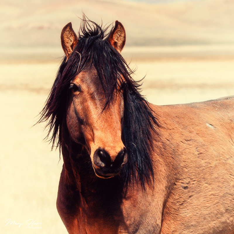 Celebrating Wild Horses in Art for #worldartday